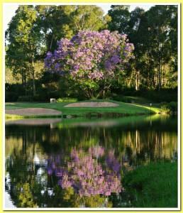 Jacaranda Reflections and 10th green