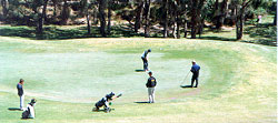 Here are is a group golfers doing the rounds and enjoying the sunshine